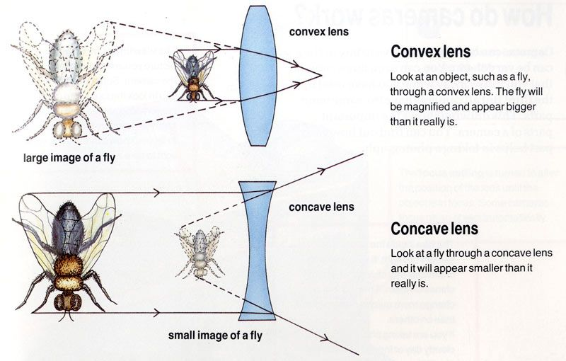 Lenses Are Used In Cameras Telescopes And Other Instruments To Refract And To Focus Rays Of Light Science Teaching Resources Astronomy Facts Physics Topics
