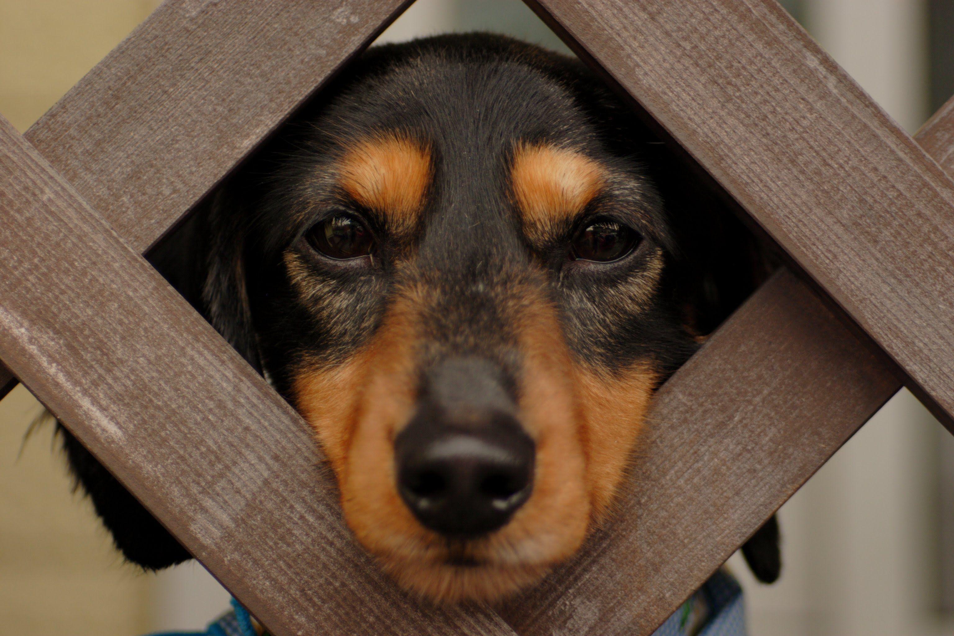 คล บตลกท ส ดในโลก รวมคล ปตลกขำๆของหมา Funny Dog Pictures Dachshund Puppies Wiener Dog
