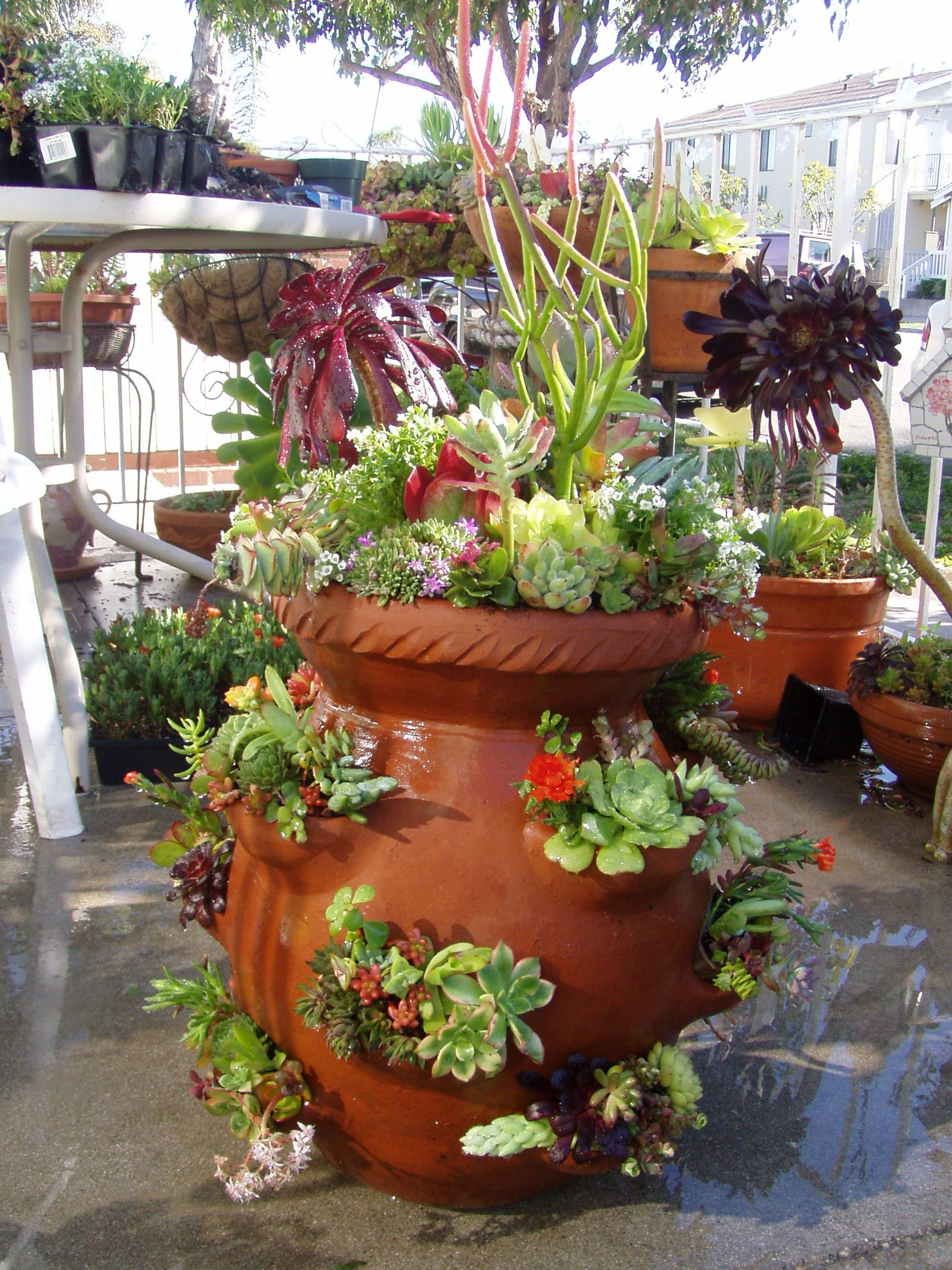 Strawberry succulent pot 252 cottage farms pinterest for Plants for outdoor garden