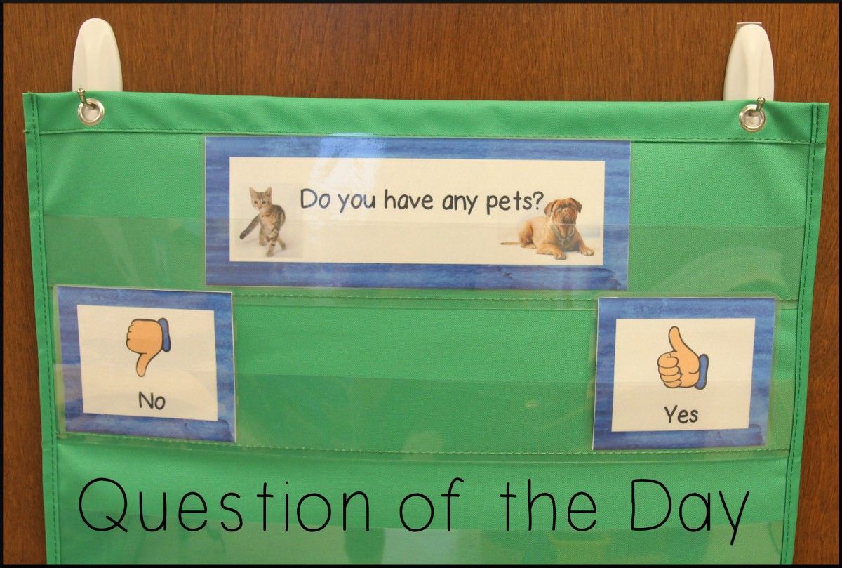 Pets Week in PreK This or that questions, Pets, Question