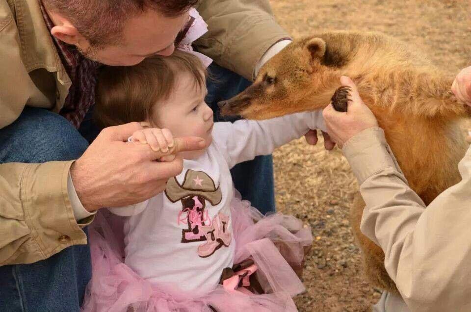 Coati kisses