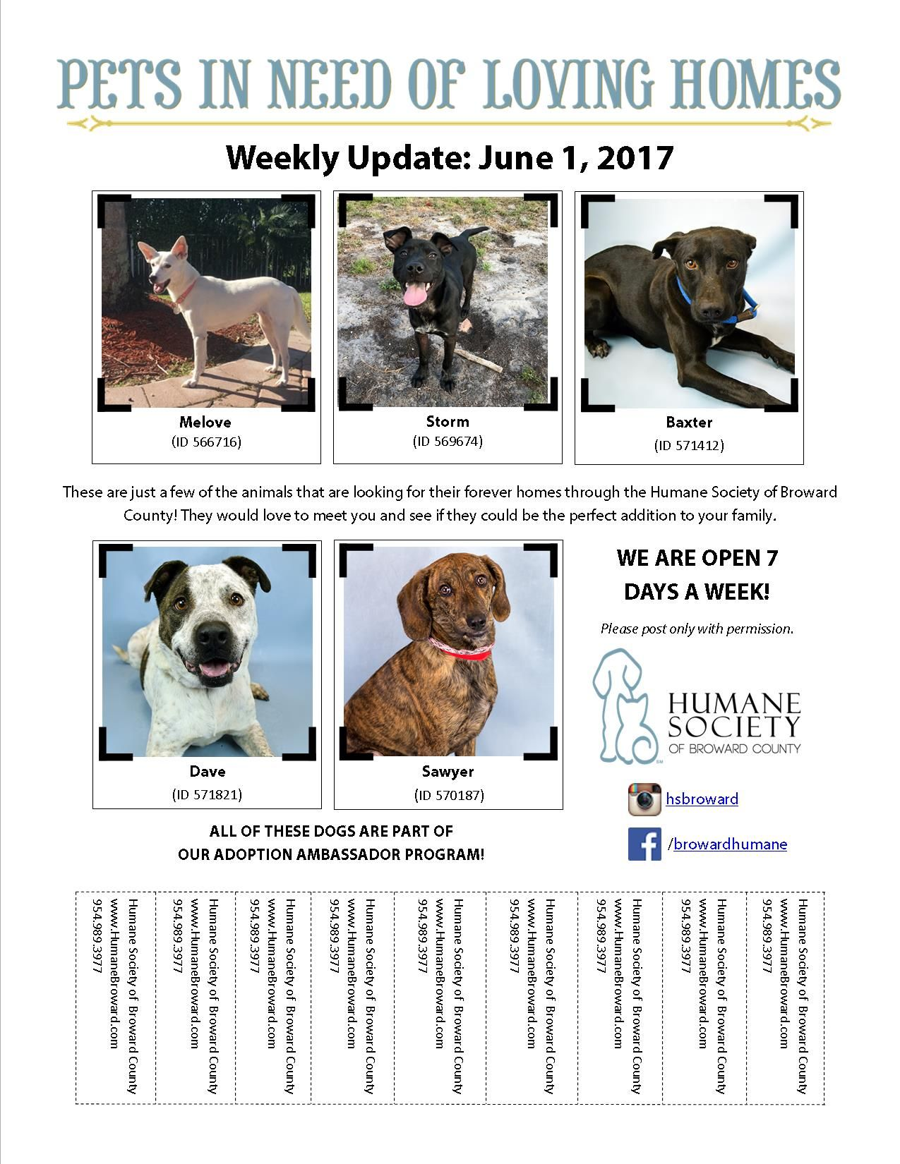Weekly Pet Flyer June 1, 2017 Pets, Humane society, Cat