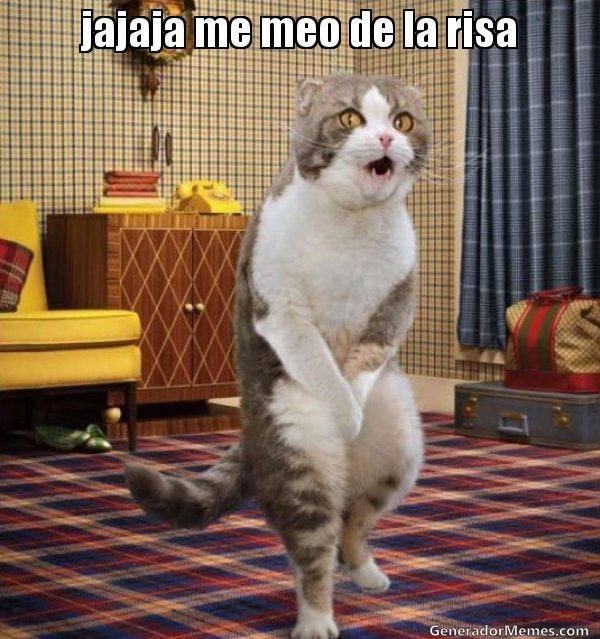 jajaja me meo de la risa - Gato meandose de las Risas