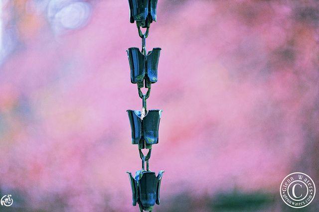 Rain Chain in Spring. © Glenn E Waters., via Flickr.