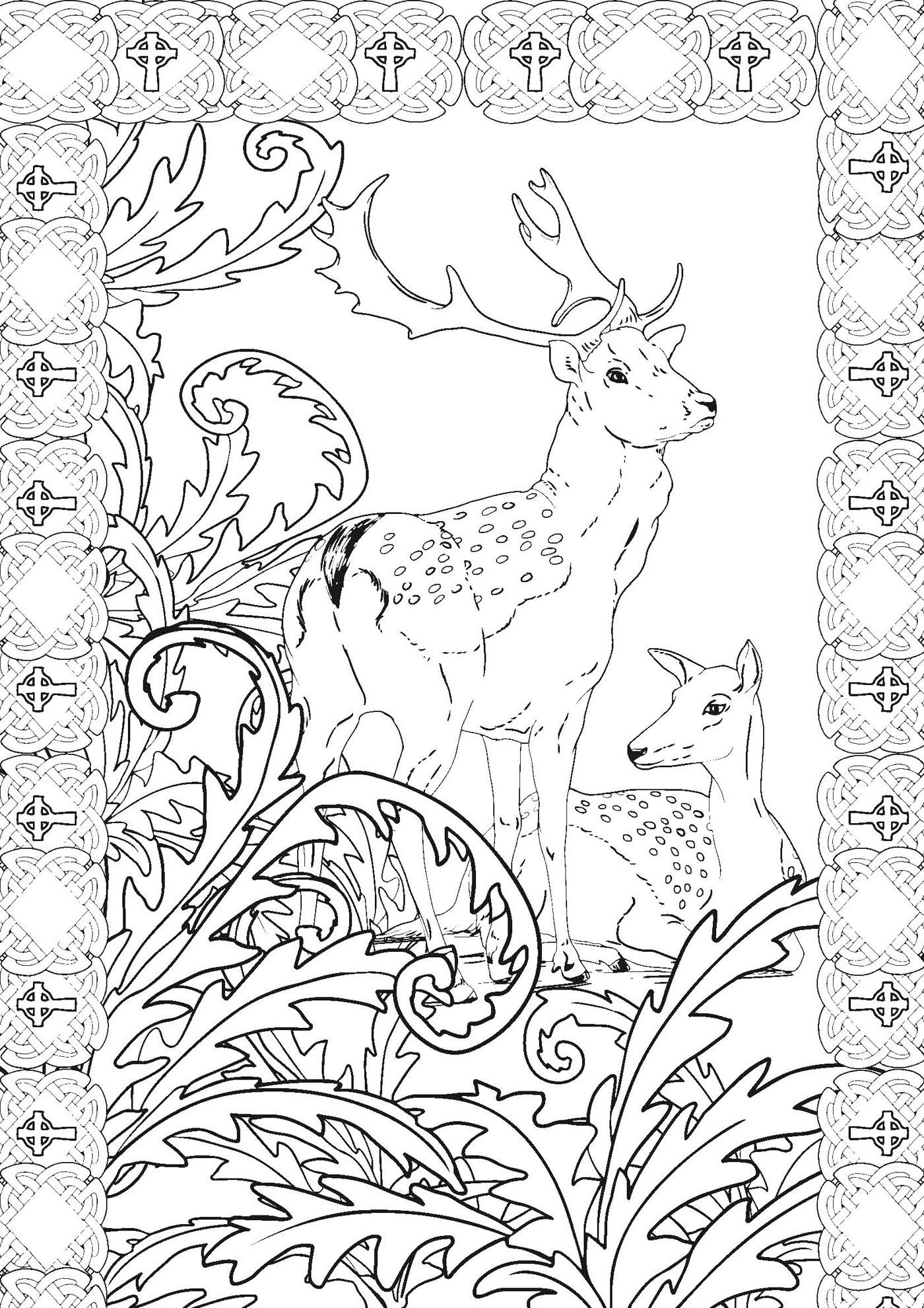 Coloriage Animaux Feeriques.Amazon Fr Forets Feeriques 100 Coloriages Anti Stress