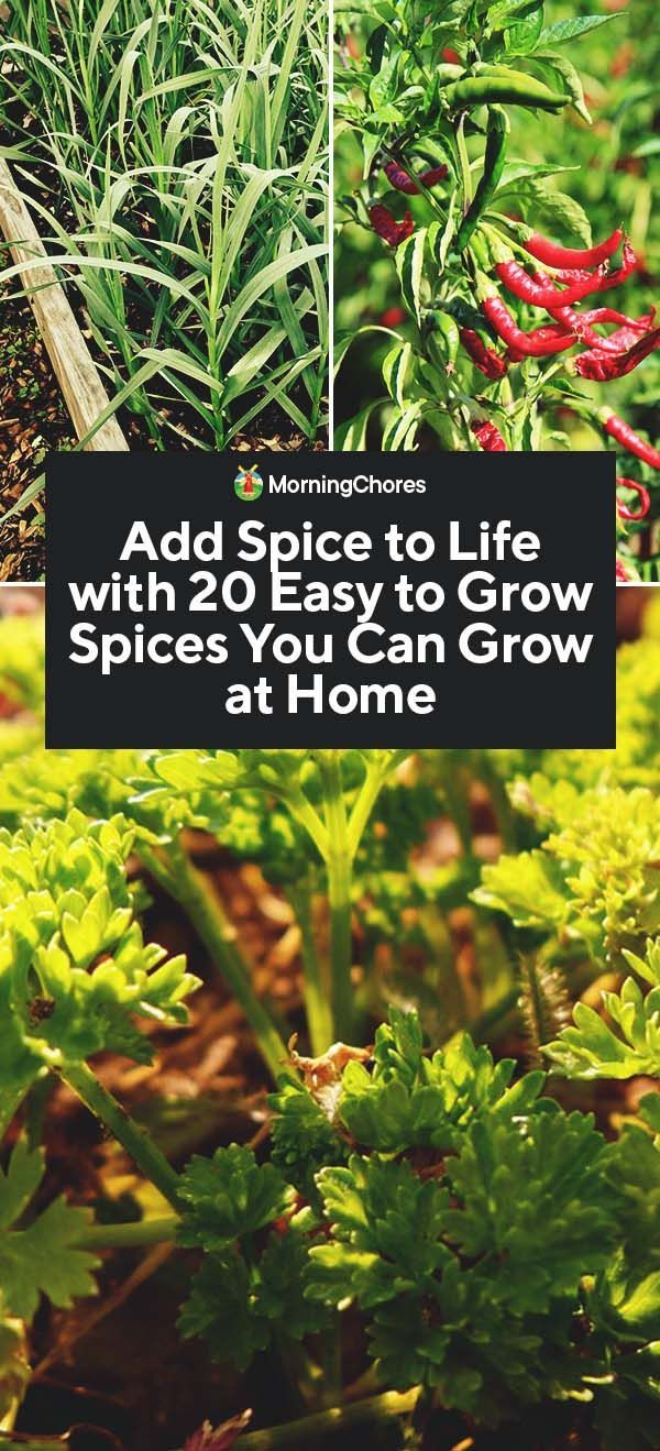20 Easy To Grow Spices You Can Grow At Home Home 400 x 300