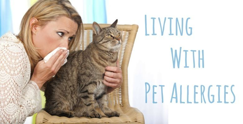 Best essential oils for pet allergies dogs and cat pet
