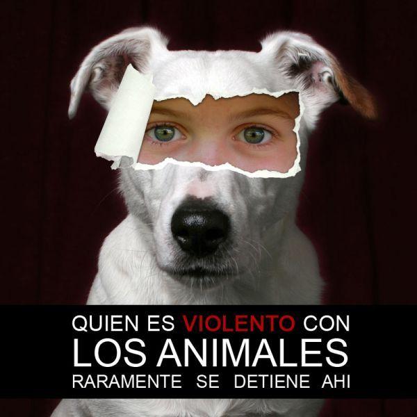 Terminemos de una vez con el maltrato animal