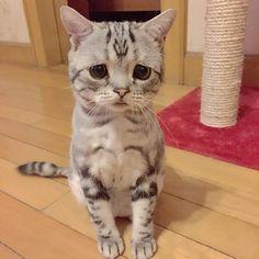 Luhu – Le chat le plus triste du monde