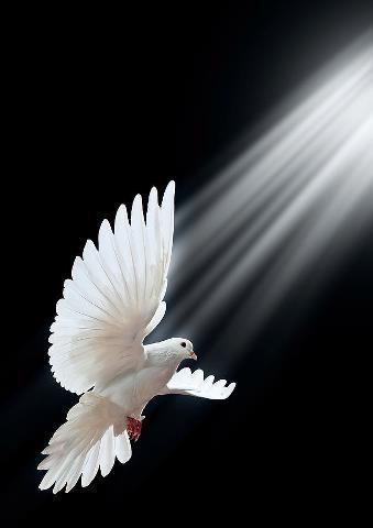 red fist over white dove symbol