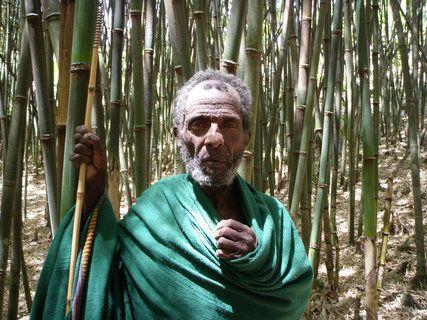 Renewable bamboo!