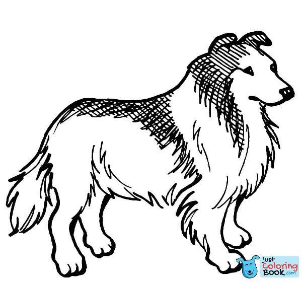 rough collie dog coloring page free printable coloring ...