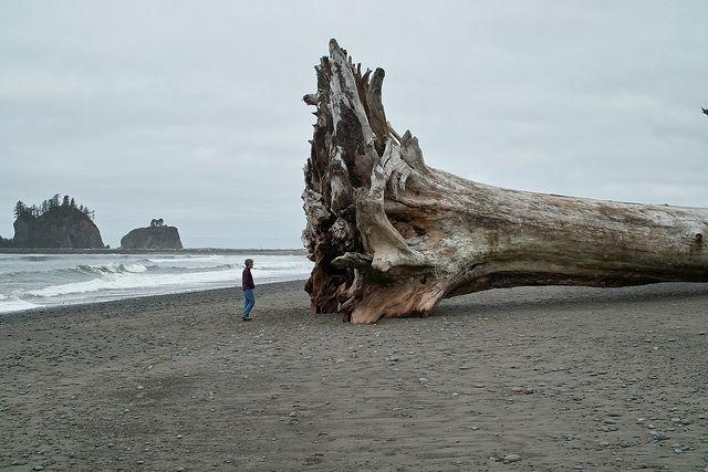 Washed onto the beach at La Push, Washington  #sea #ocean #Pacific
