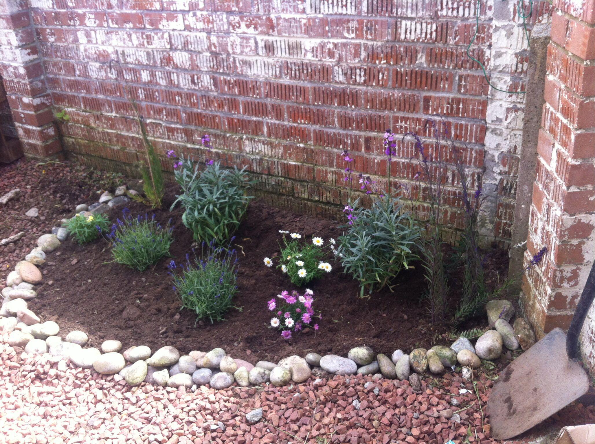 My Easy To Maintain Rockery Garden Plants 400 x 300