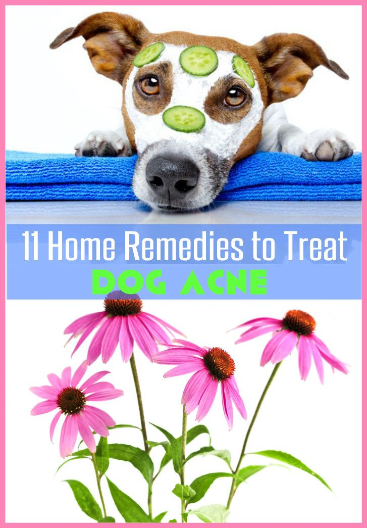 11 Natural Home Remedies To Treat Dog Acne Petcare Dogcare