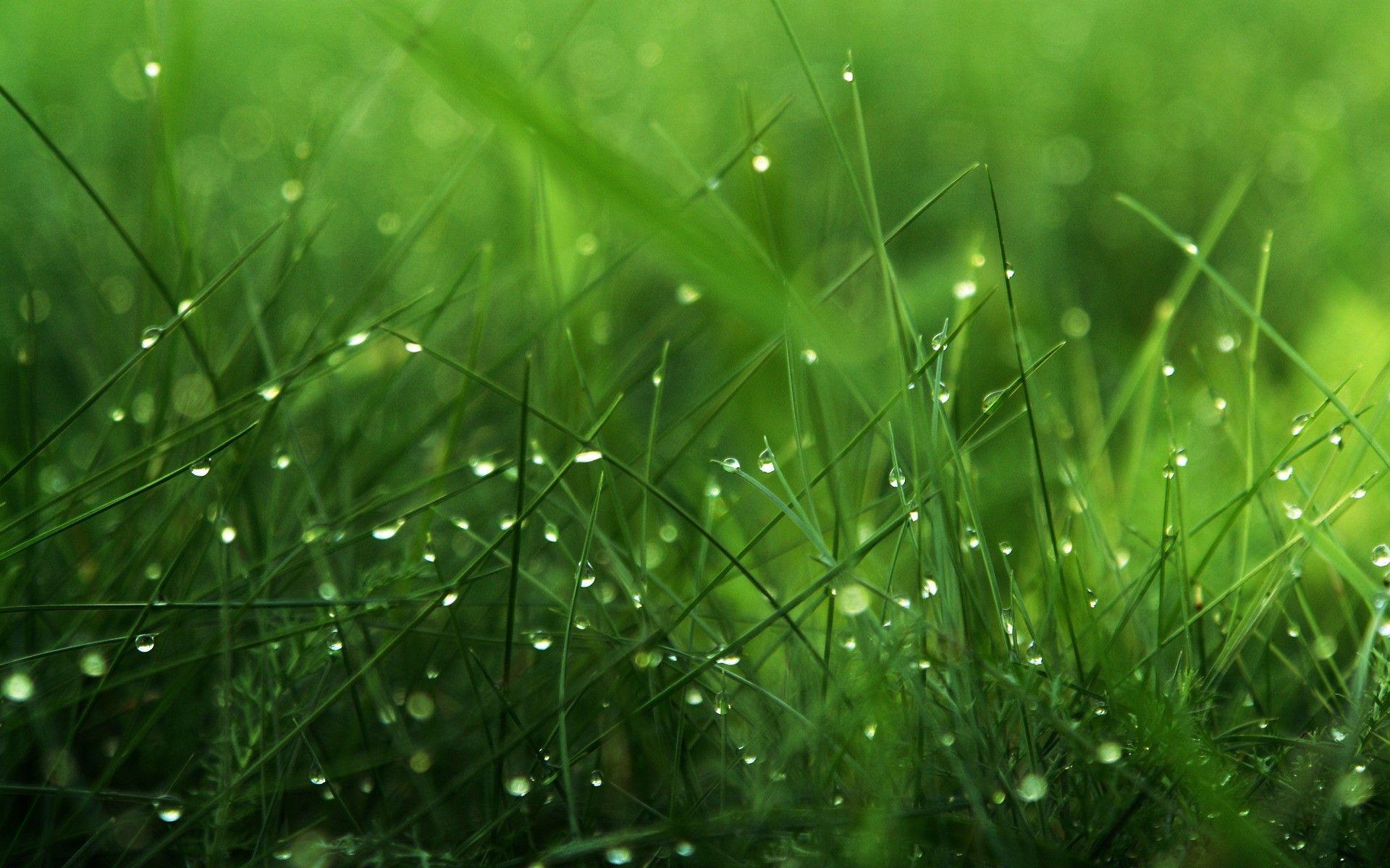 dewy grass Grass wallpaper, Green nature wallpaper
