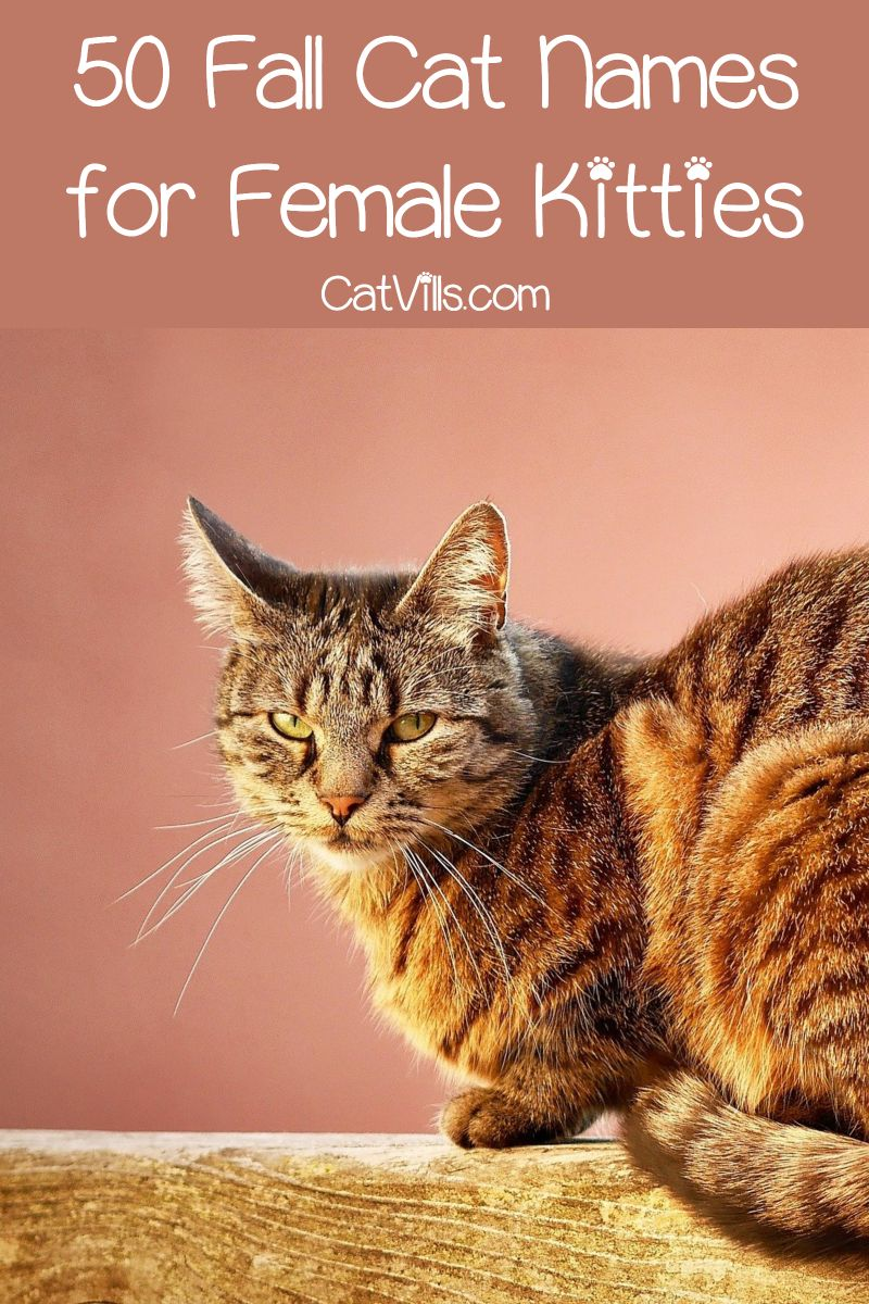 100 Fantastic Fall Cat Names for Male & Female Kittens