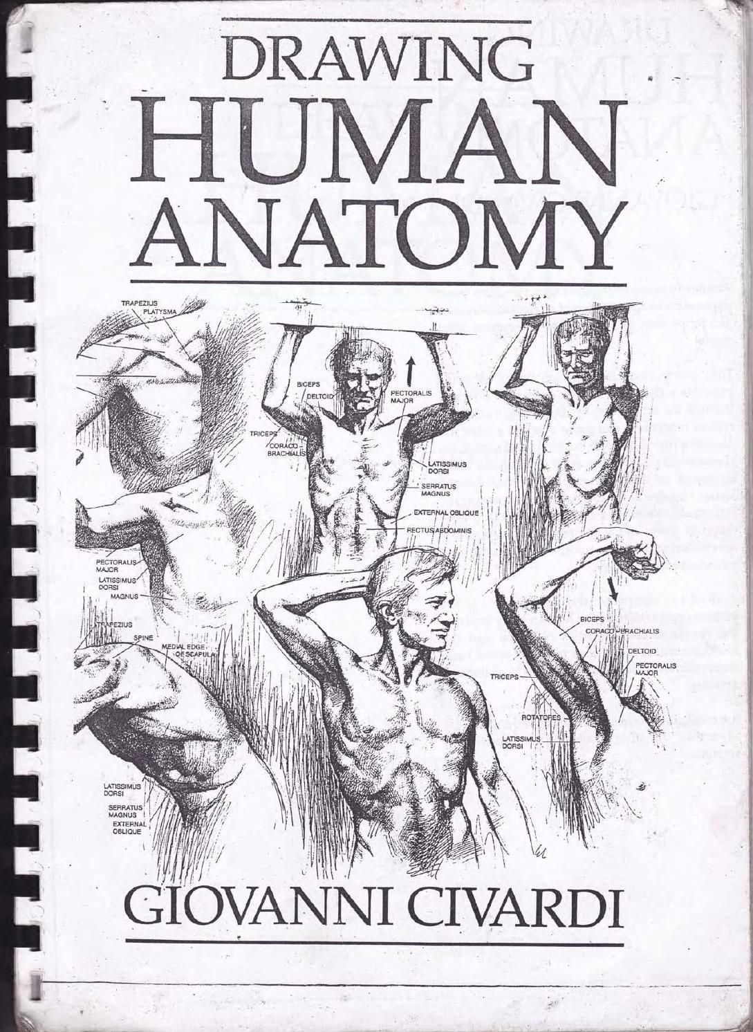 practical anatomy for artists pdf