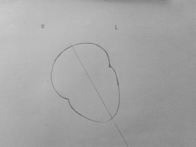 Step By Step Tutorials On Drawing Biology Diagrams Nag