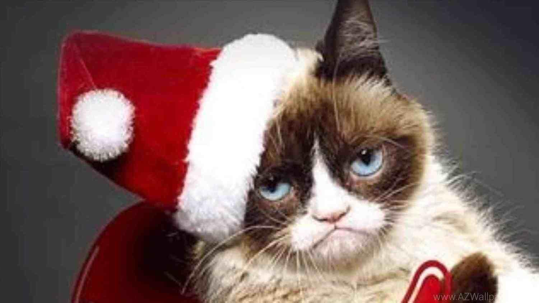 New post grumpy cat christmas decors ideas pinterest grumpy