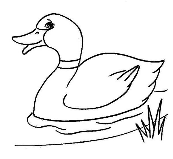 Duck Coloring Pages Forcoloringpagescom nursery room