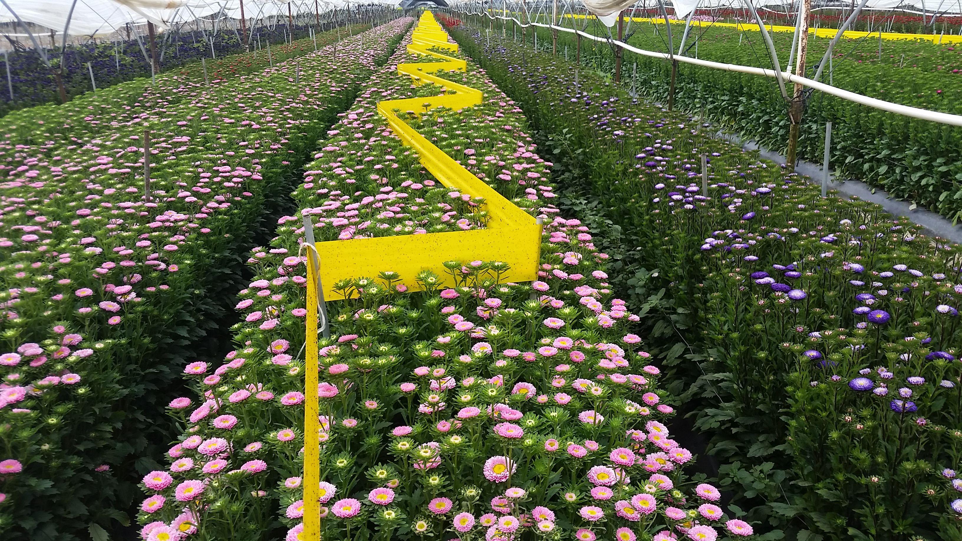 Pin On Flower Farmin