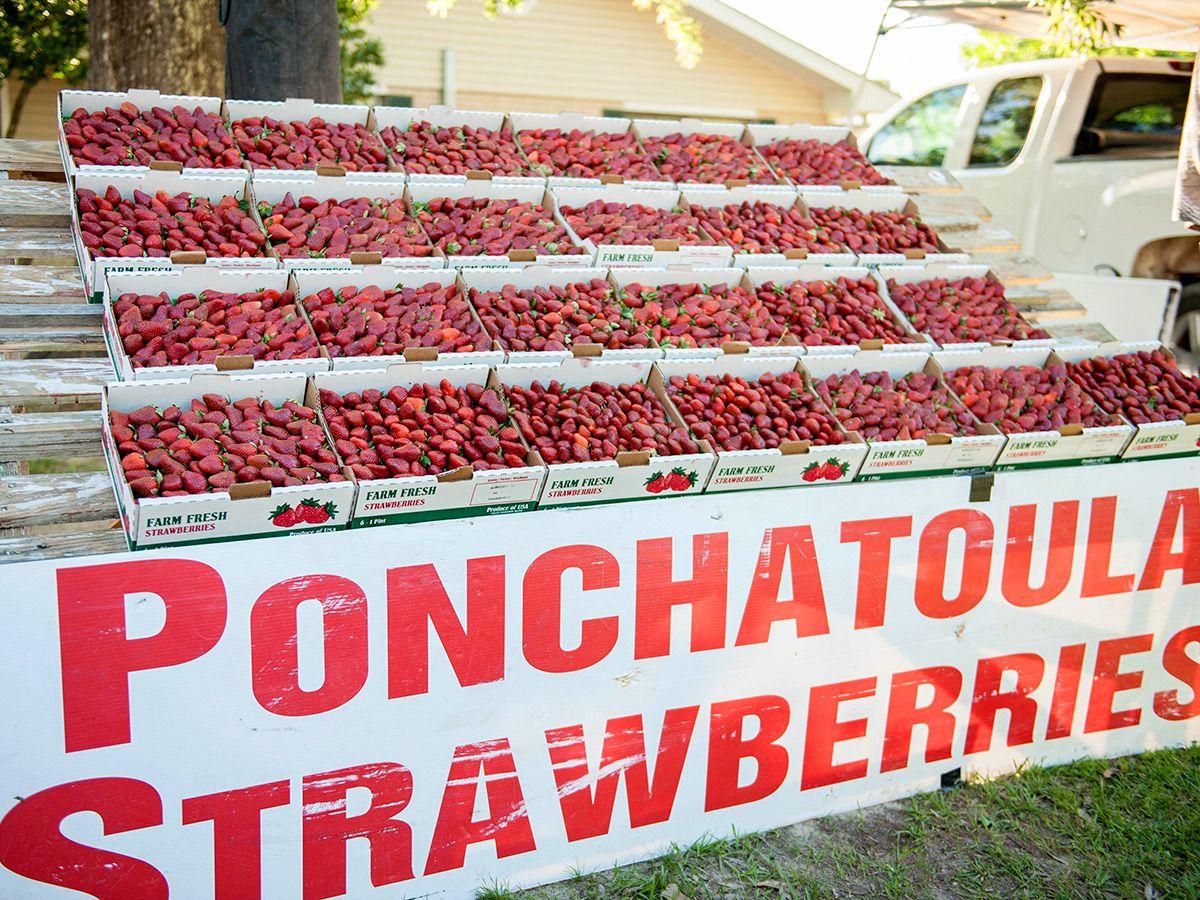 Ten Things To Do In Tangipahoa Parish In 2020 Tangipahoa Parish Ponchatoula Louisiana Things To Do