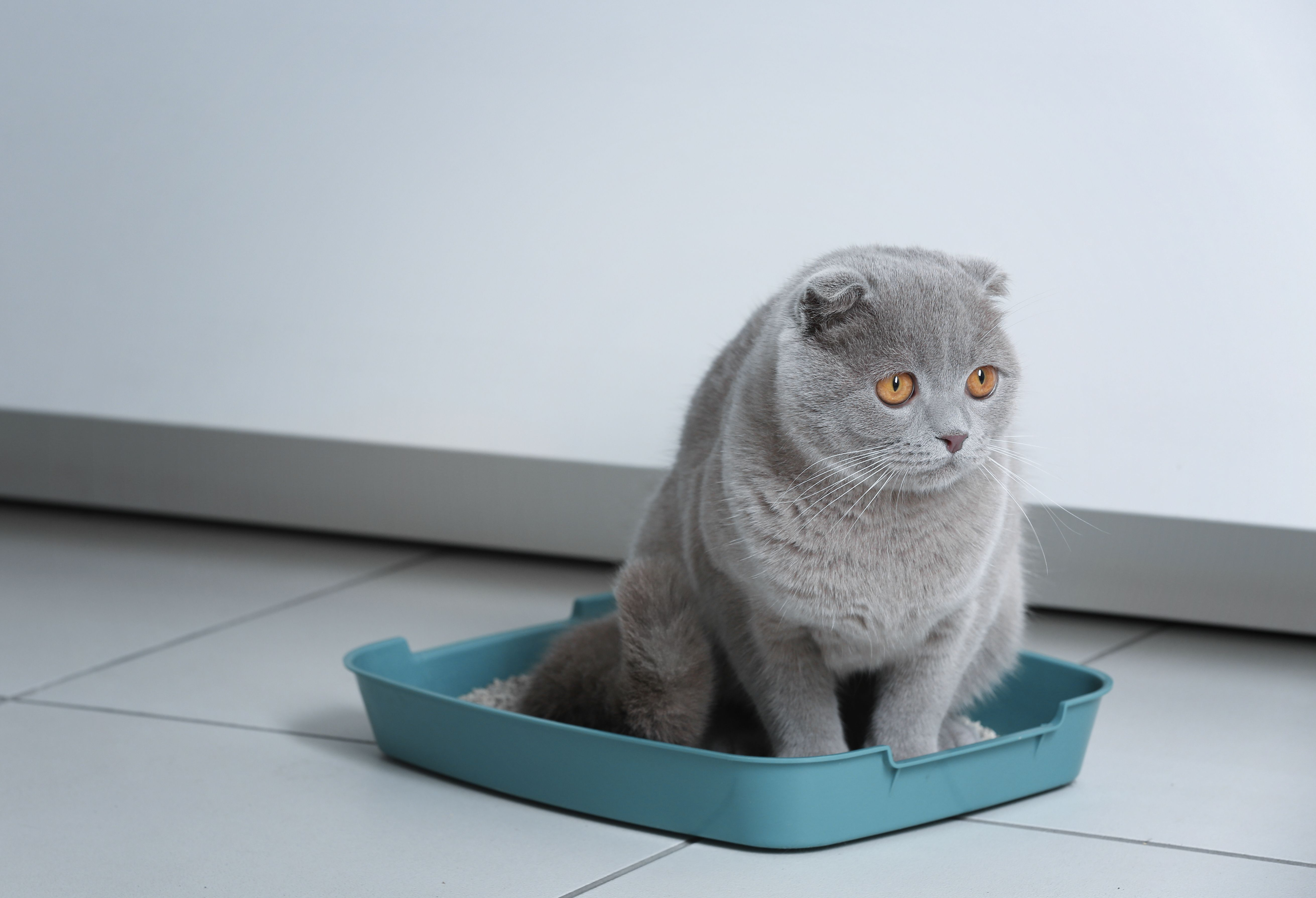 Litter Box Solutions For Elderly Cats