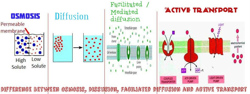 Difference Between Osmosis Diffusion Facilitated Diffusion And Active Transport Plasma Membrane Structure And Function Special Education Lesson Plans