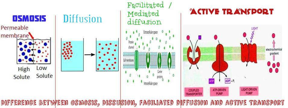 Diffusion osmosis study guide