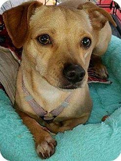 Pin By Mia On Help Dogs Dachshund Adoption Dogs Dachshund