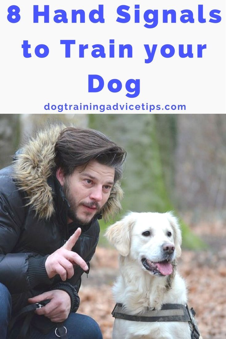 Cattle Dog Training Commands And Pics Of Dog Behavior In Hindi