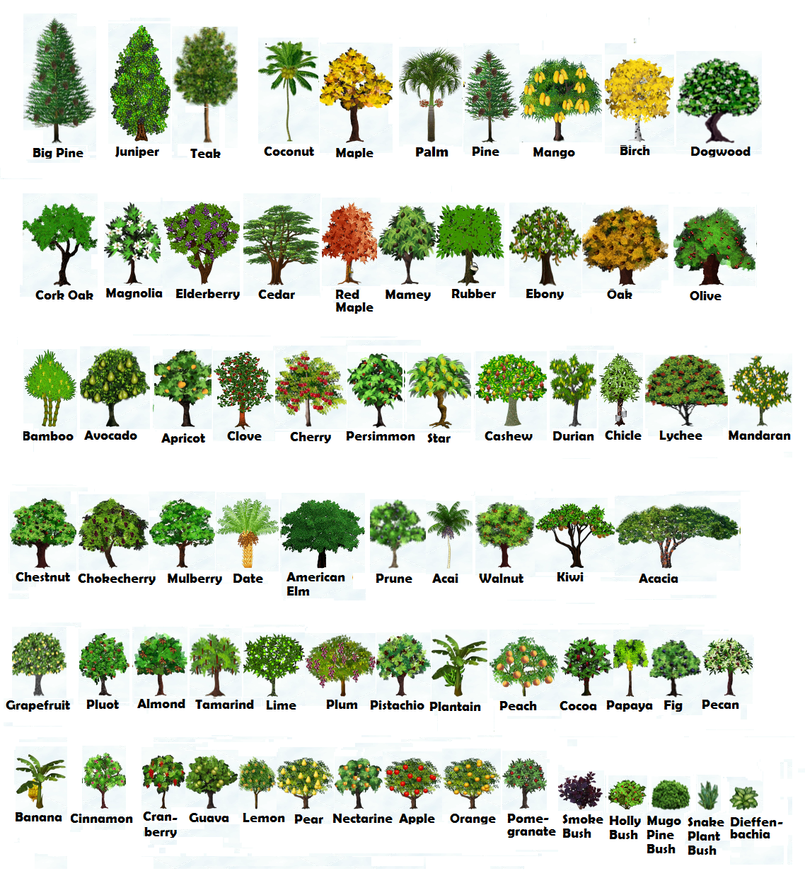 CHOP AND SHAKE TREES HEIGHT and GROWTH