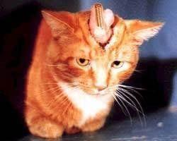 Petition · que la société Ambi (Johnson & Johnson) 1 Johnson & 1-888-879-2624 www.ambiflawlessskin.com/ stop la vente de produits issue de l'expérimentation animal !! · Change.org