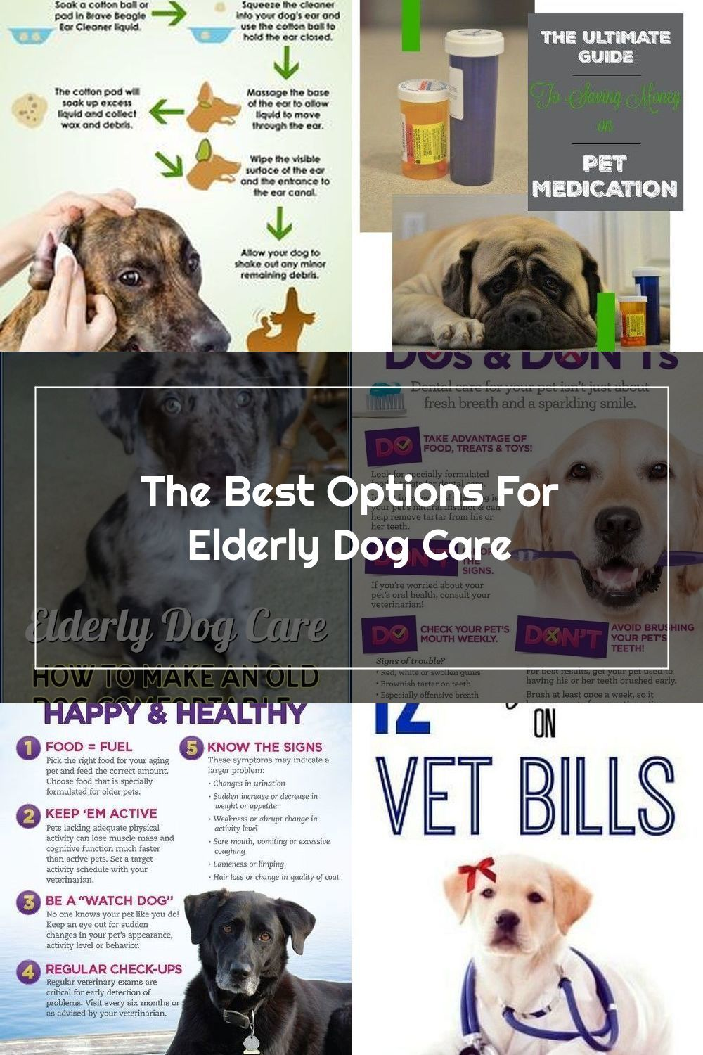 Pet Health Insurance Can Help Although You Will Pay A Monthly Or
