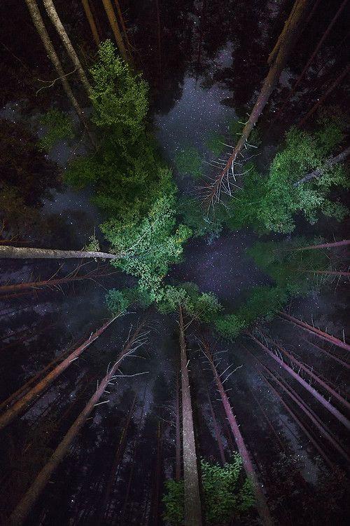 Looking Up At Trees At Night
