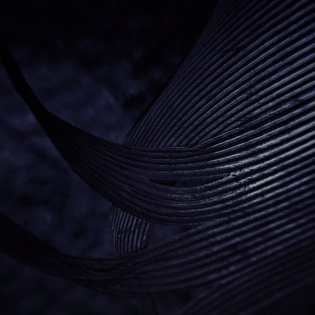 @finny_c | feather at night | Instagram
