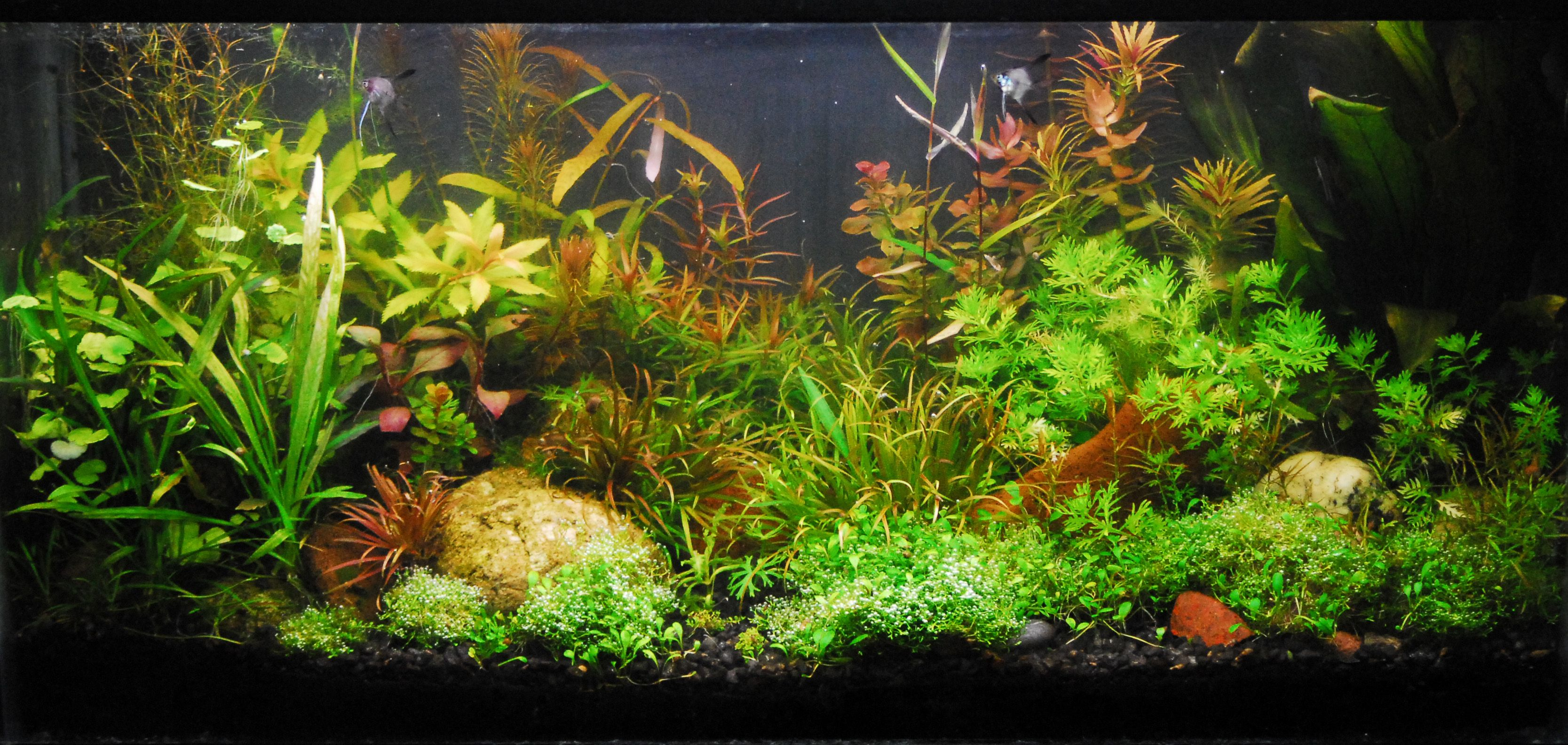 natural aquariums guide to planted aquariums aquatic plants