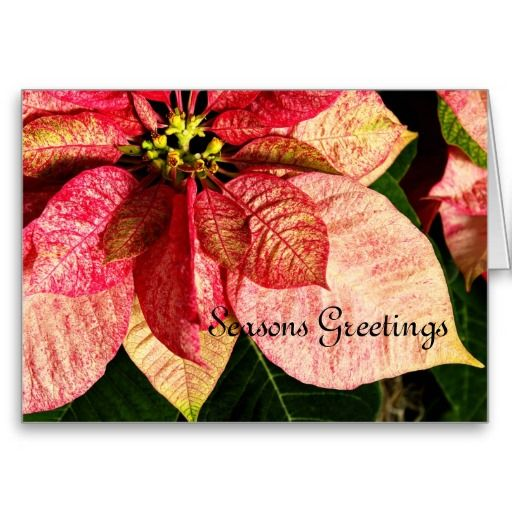 Red and Gold Poinsettia Card