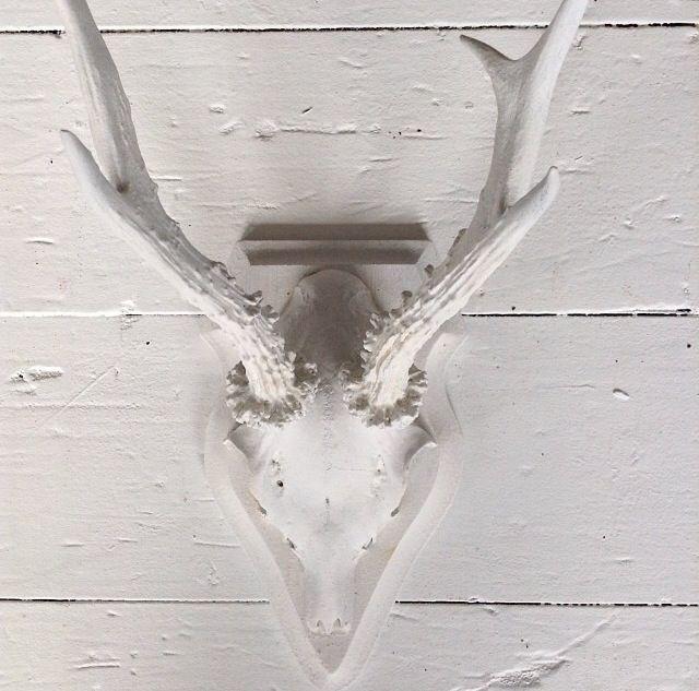 Wit gewei hert wonen geweien hertenkoppen ibiza skull for Wit gewei decoratie