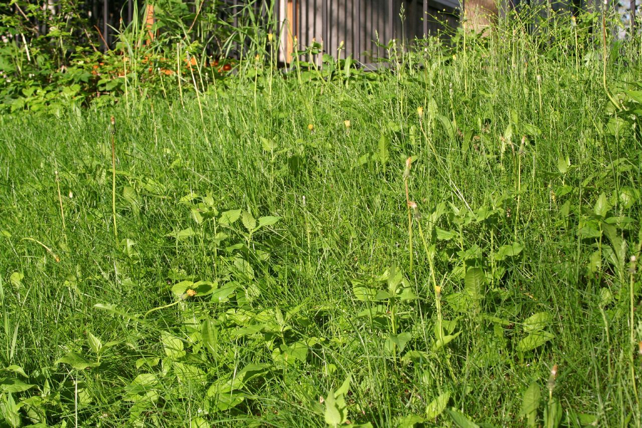 Soil types and weeds how to tell which soil you have by the weeds