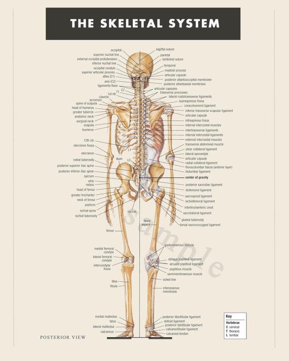 download skeleton