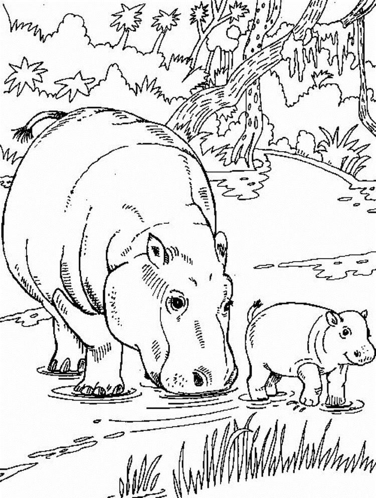 African Animal Coloring Pages Hippo Family Animal Coloring Pages