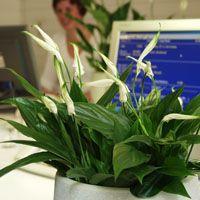 50 plantas purificadoras