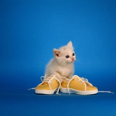 Tips On Teething In Kittens Meow Kitten Teething Toys Kittens Cutest Baby Kittens