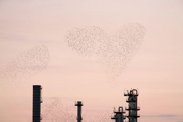 Refinery Flocks: Photos by Massimo Cristaldi