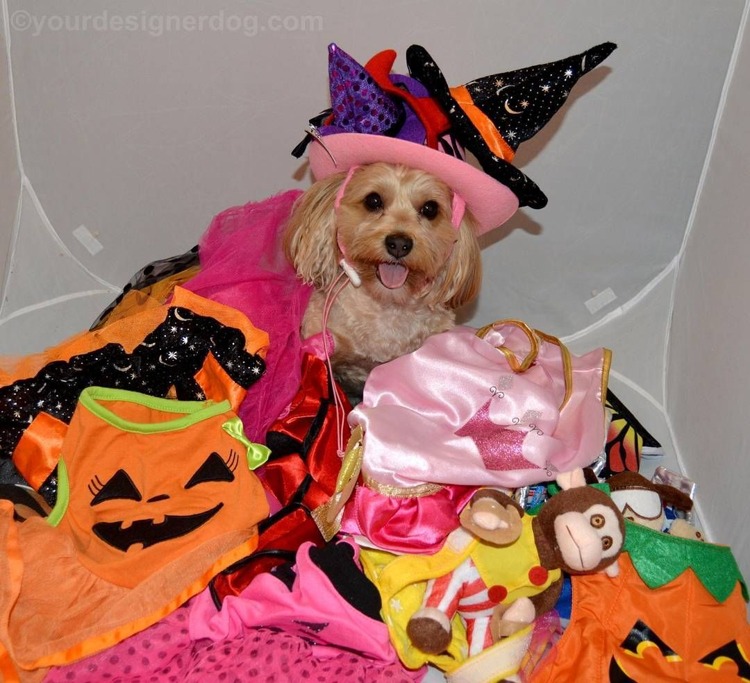 Are you sure Halloween only happens once a year? I want to