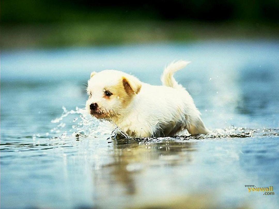 8 Cute Dogs Wallpapers Hd Wallpaper Cute Dog Wallpaper Cute Dogs Images Dog Wallpaper