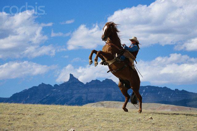 Running Horse Sunset Hd Wallpaper Widescreen Background Pictures Running Horses Background Pictures Horses