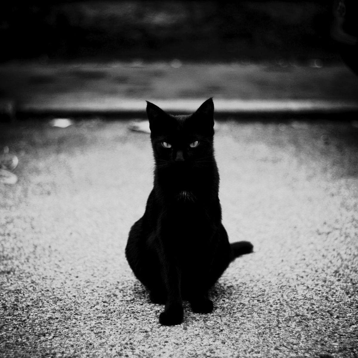 больше мрачные коты фото кирпича должно